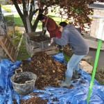 Tamisage compost
