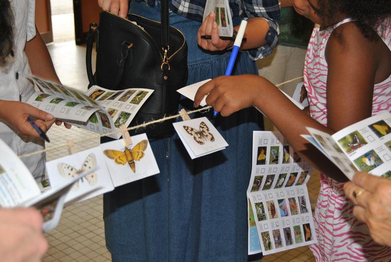 Mercredis de la Biodiversité : ouvrons nos yeux et découvrons les papillons à Saint-Poncy !