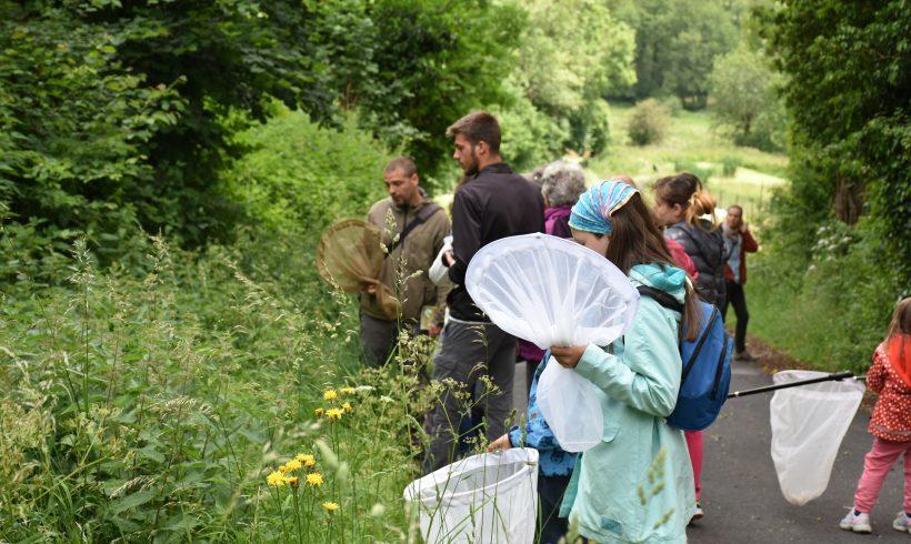 Mercredi de la Biodiversité – Juin 2018 : « Découvrons les papillons »
