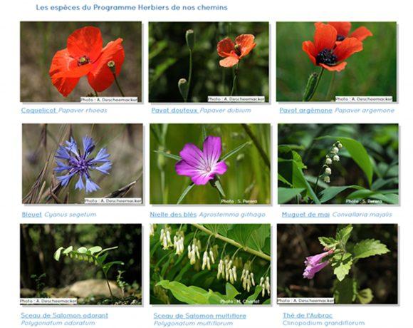 Atlas de la Biodiversité Territoriale  :  une nouvelle enquête de l'Atlas  «Herbiers de nos chemins», des nouveautés sur le site internet !