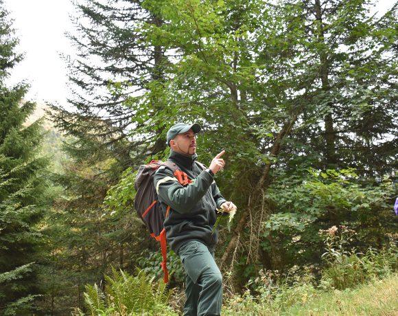 Mercredi de la Biodiversité à Laveissière : « La forêt : une niche de biodiversité  »
