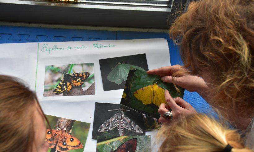 Mercredi de la Biodiversité : les papillons de nuit symboles d'équilibre écologique