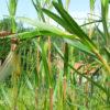 Mercredi de la Biodiversité : libellules et demoiselles en danger