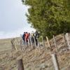Exploration nature en Cézallier : à la recherche des jonquilles et des Pies-Grièches grises