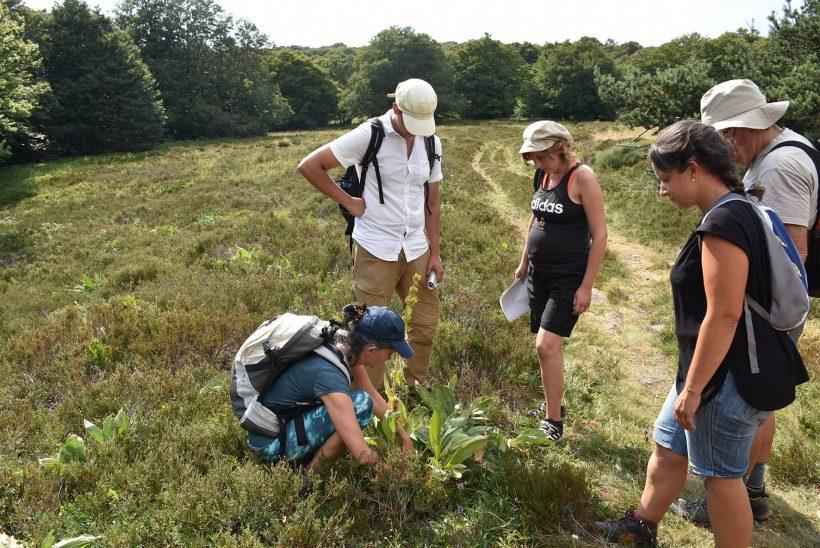 Atlas de la Biodiversité Territoriale : «Espèces de Gentiane !» – Saint-Urcize