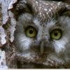 Atlas Biodiversité Territoriale : Newsletter Juillet 2019