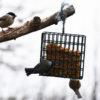 C'est l'hiver… aidons les oiseaux au jardin ! Neussargues-en-Pinatelle