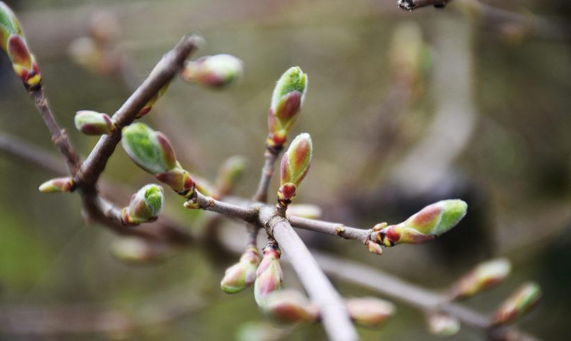 Mercredi de la Biodiversité – « Observons le printemps ! Phénoclim : les impacts du changement climatique »