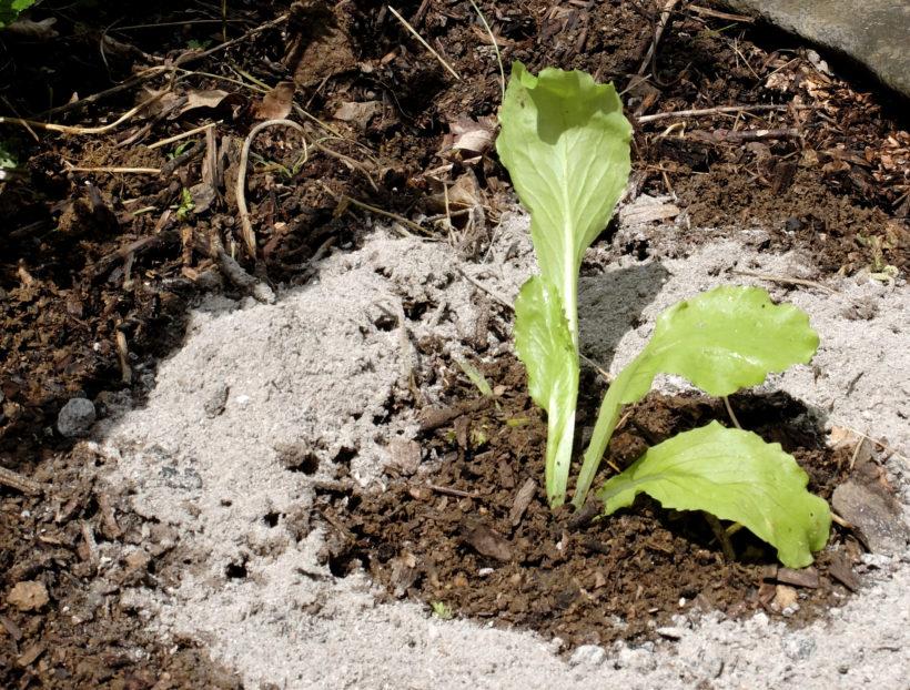 Pour réduire nos déchets, des astuces pour agir ! 4 – La Récup au Jardin 2/2