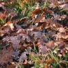 Les feuilles mortes… un cadeau pour : le composteur, le jardin et les hérissons !